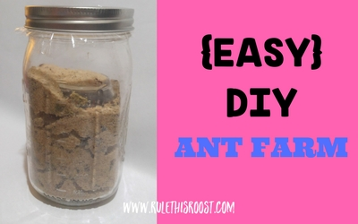 Easy DIY Ant Farm