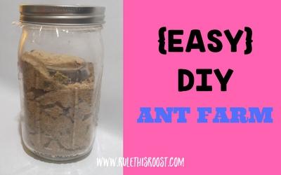 Easy DIY Ant Farm