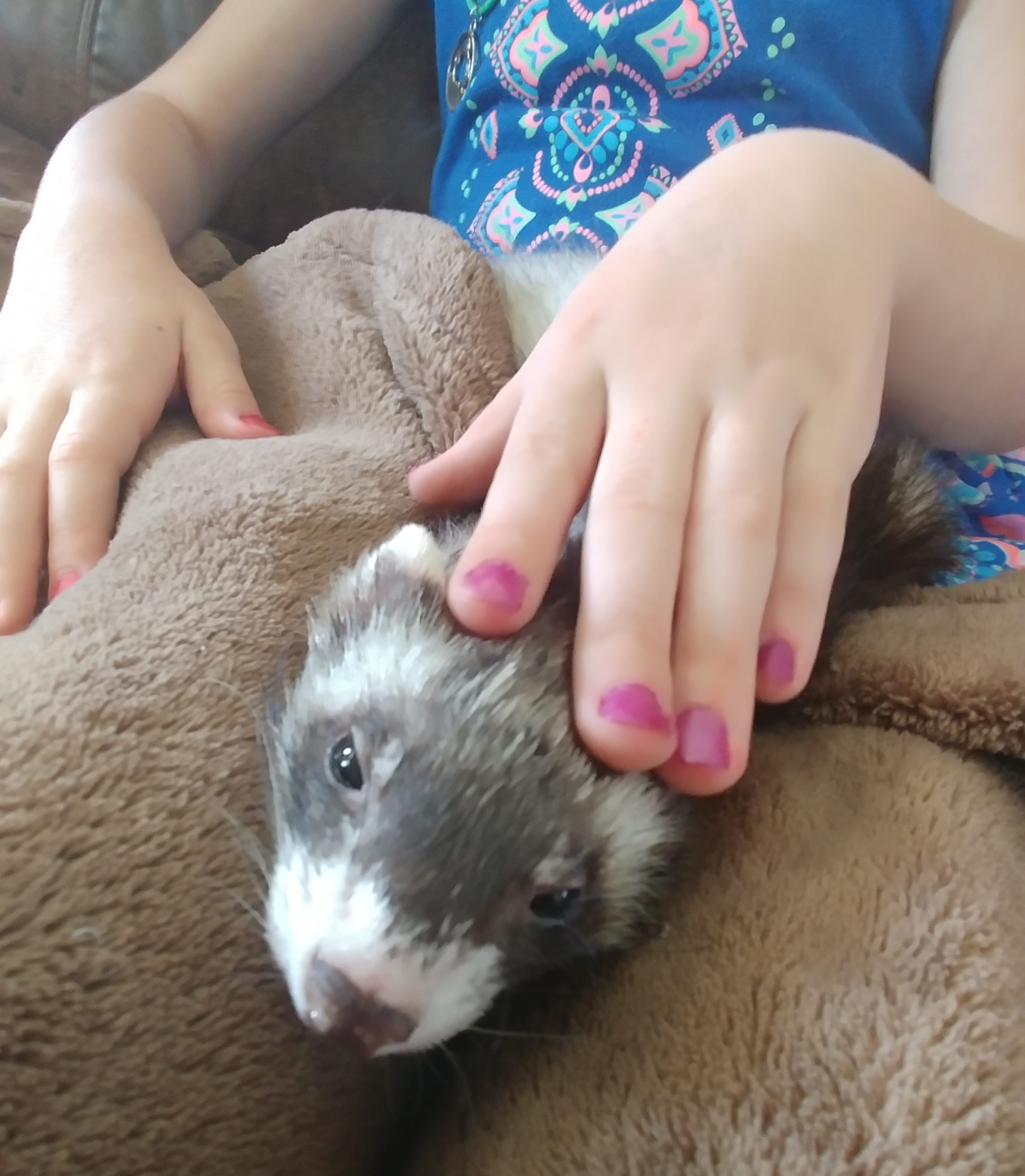 day in the life unschoolers ferret (2)
