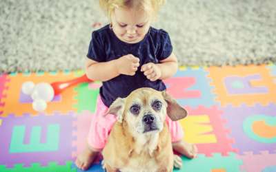 Keeping Kids Safe Around Dogs